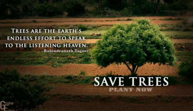 Saving a Single Tree Saves Millions of People
