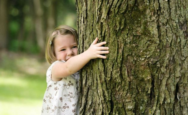 Tree Preservation: Ways to Take Care of Your Trees